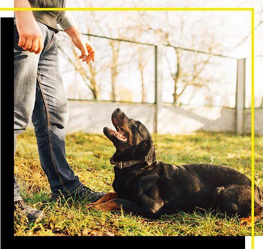 Image of a person training a dog to lay down