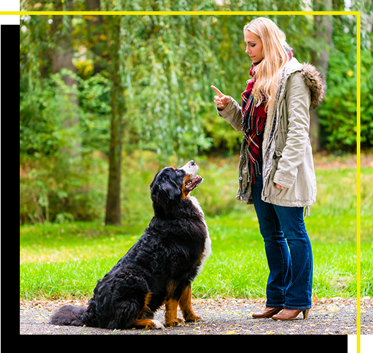 Image of a person training a dog to sit